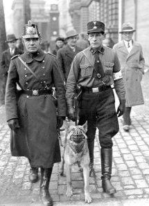 dog-patrol